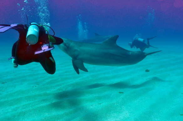 dolphin 124
