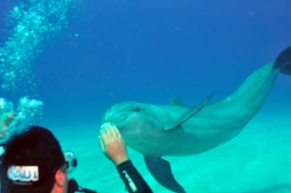 dolphin na mao