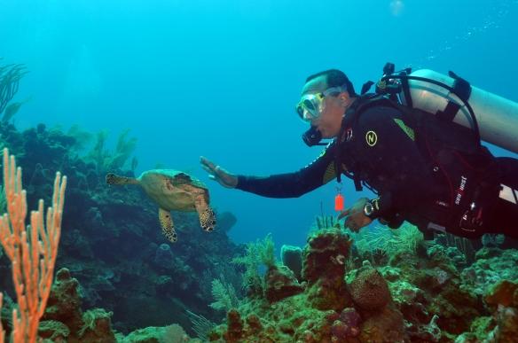 robson e tartaruga 2
