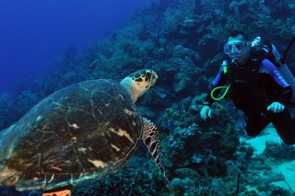 turtle e capetinha